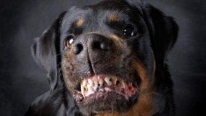 woeste-hond